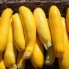 Petites Courgettes jaunes Bio