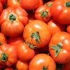 Tomates rondes hybrides Bio