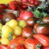 Tomates populations dites anciennes Bio