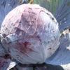 Chou cabus lisse rouge Bio