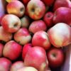 Pommes, variété Jubilé Bio