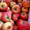 Pommes, variété Pilot Bio