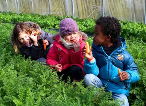 loulous carotte