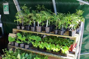 Plants bio de La Ferme du Coin